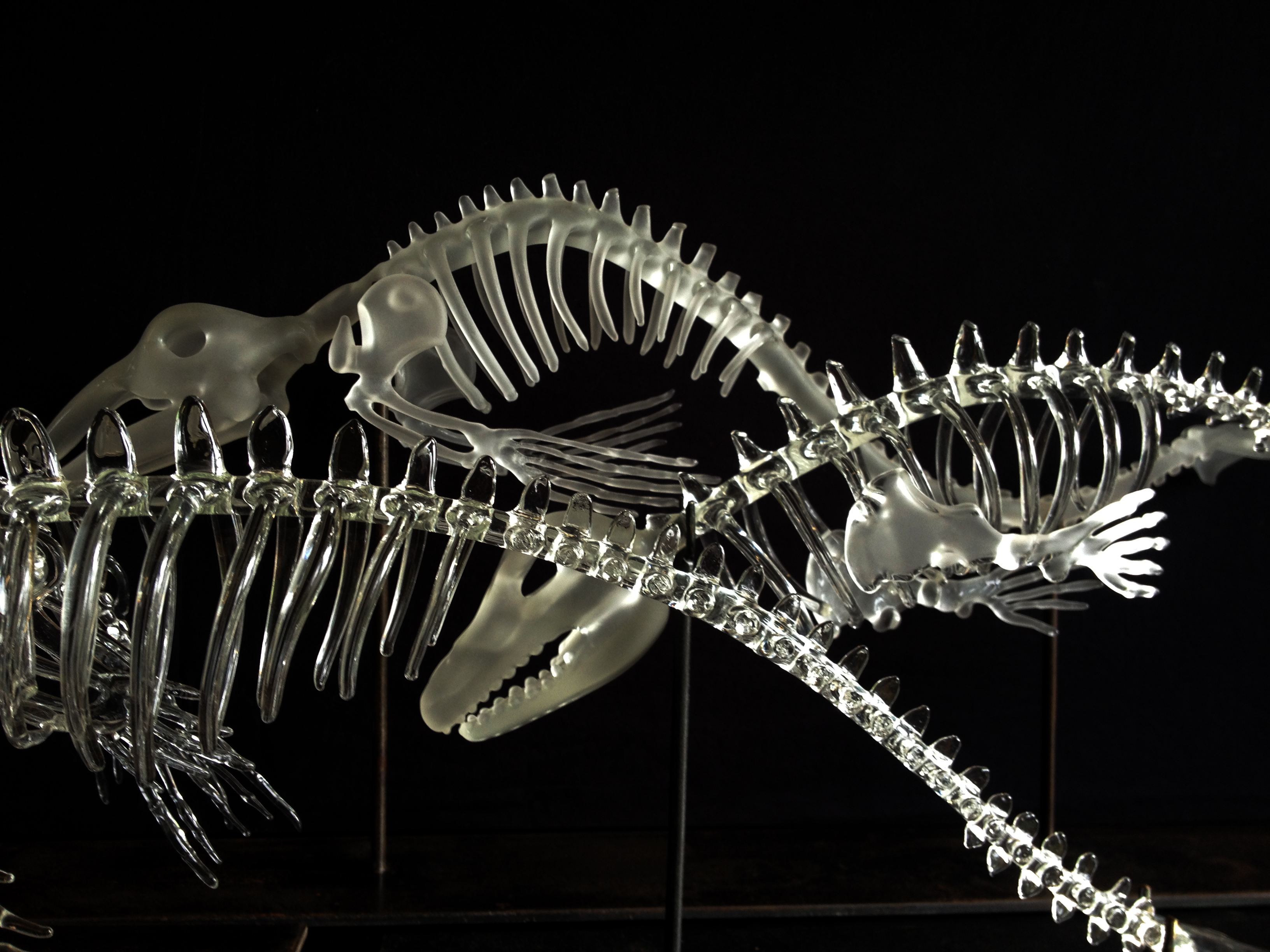 baleine, narval, orque