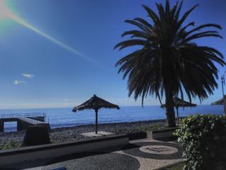 euphonia foi acolhida pelo Sol de Santa Cruz, Madeira Agradecido