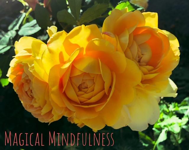Mindfulness rose