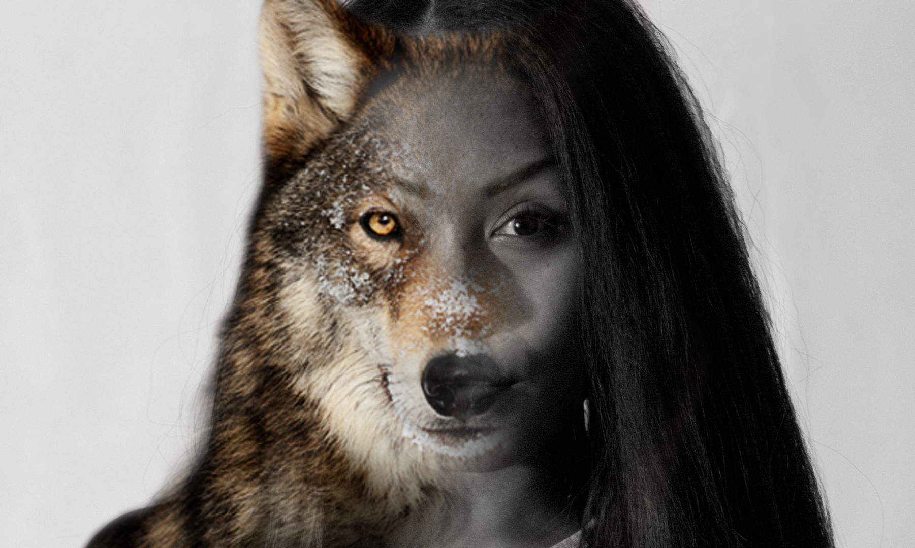 Asher- Wolf