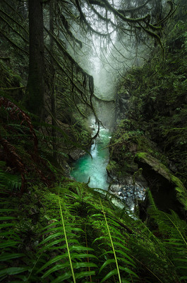 Evergreen Heaven