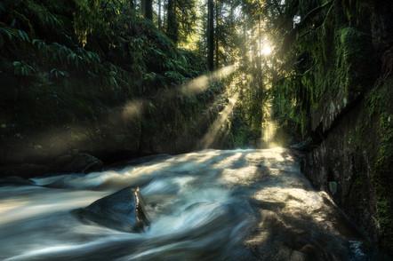 Rainforest Zen