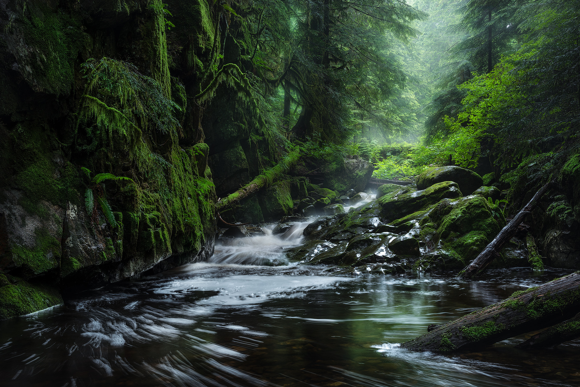 Forest Photography - Day Workshop