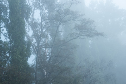 Phantoms in the Mist