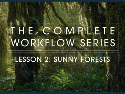 Welcome to my new website! My new forest tutorial is also live!