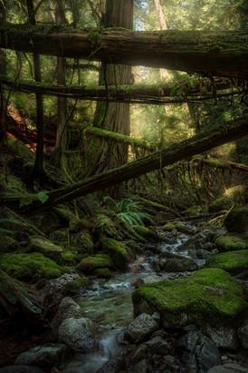 Creekside Cedar