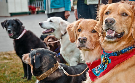 Group of therapy dogs wearing collars and bandanas