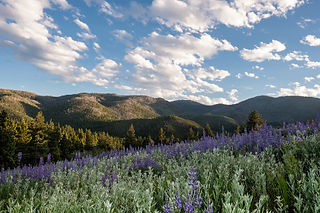Yoga Retreat Ayurveda Retreat Helena Montana