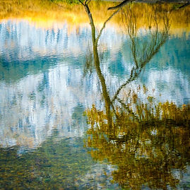 Tree reflection in water.jpg