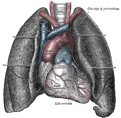 Pranayama Breathing Exercises for COVID-19