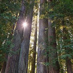Yoga and Ayurveda Retreat June 2021 Sonoma County CA