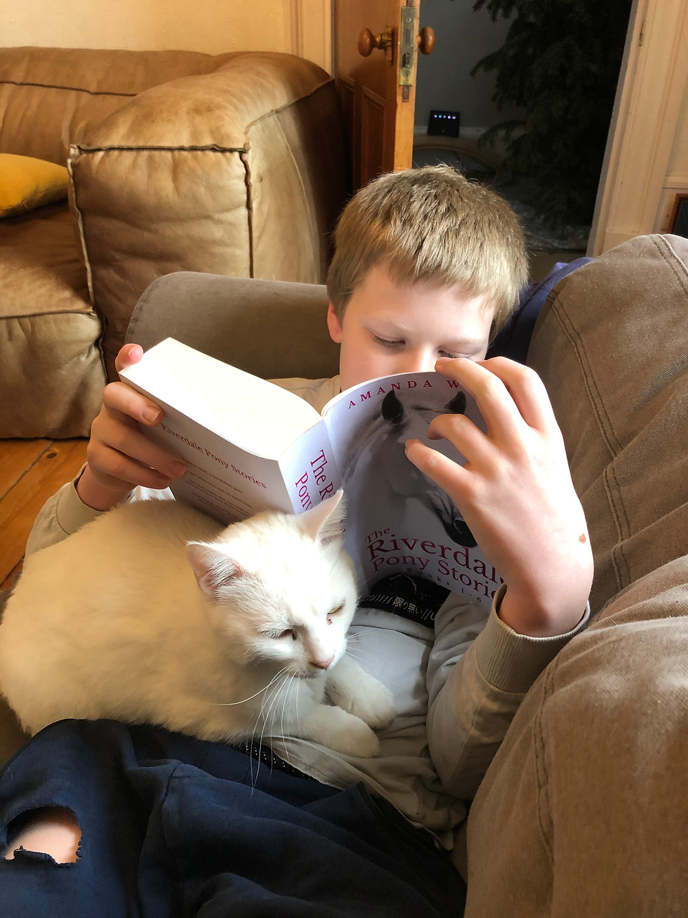 Boy on Sofa reading book with cat.