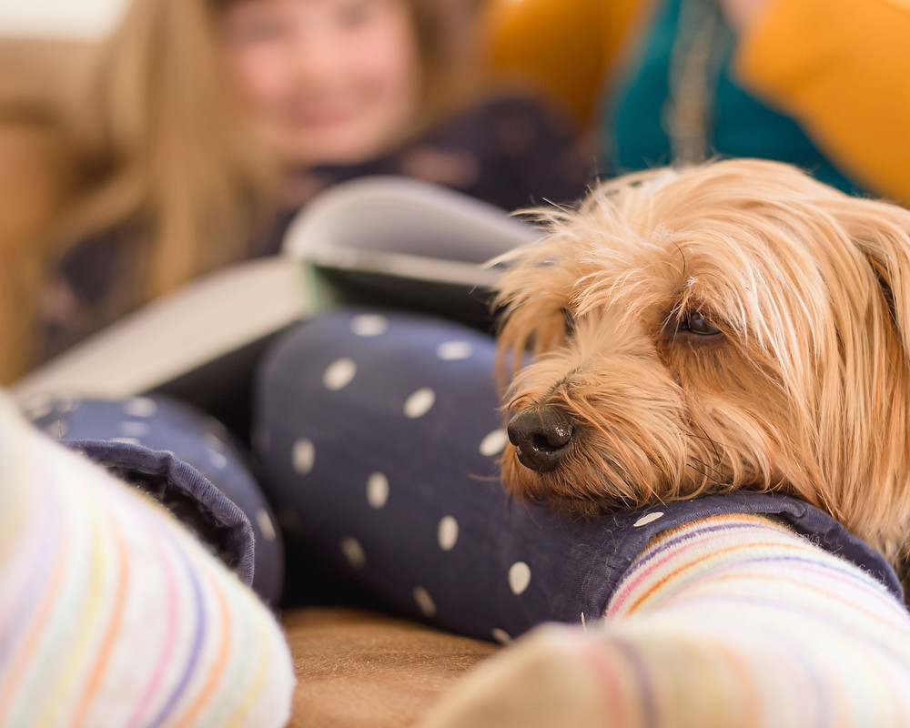 Dog resting it's head-on young child's leg whilst reading. Cosy.