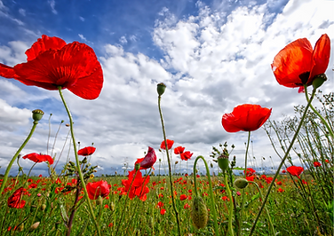 Remembrance Day _ Recommended Reads _ Hi
