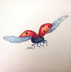 Ladybird 163