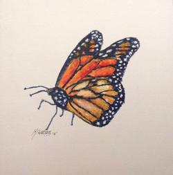 Butterfly 164