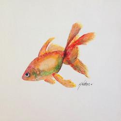 Gold Fish 165