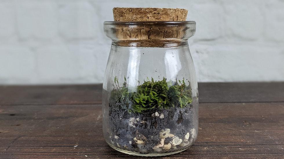 Mini Cork Top Moss Terrarium