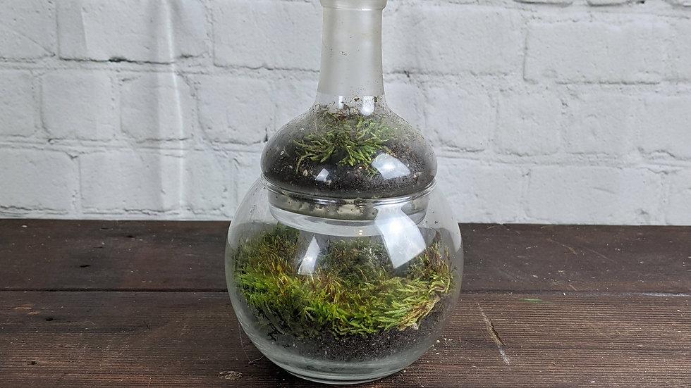 Double Tiered Glass Bottle Moss Terrarium