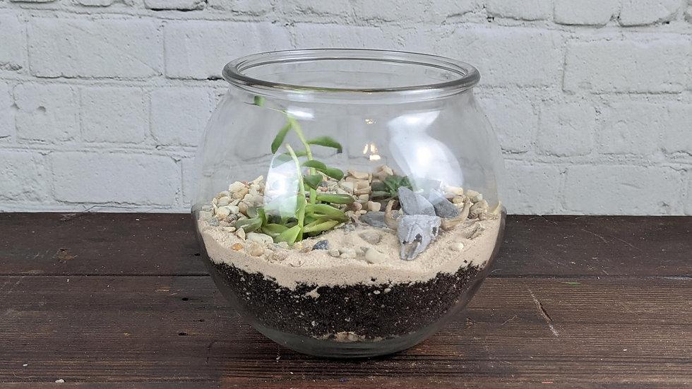 Desert Scape Succulent Terrarium