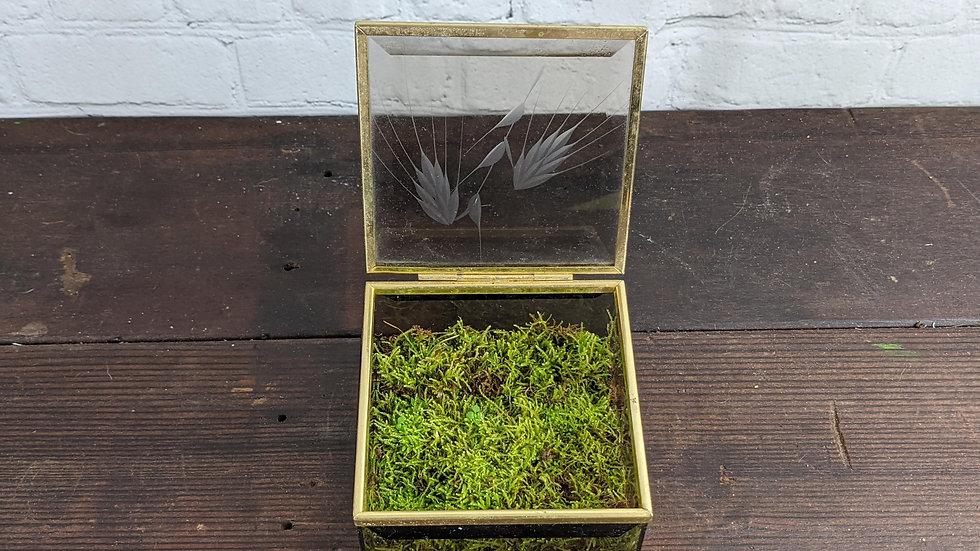 Glass Box Moss Terrarium