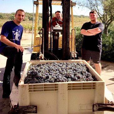 Shayne & Harvest Crew 2020