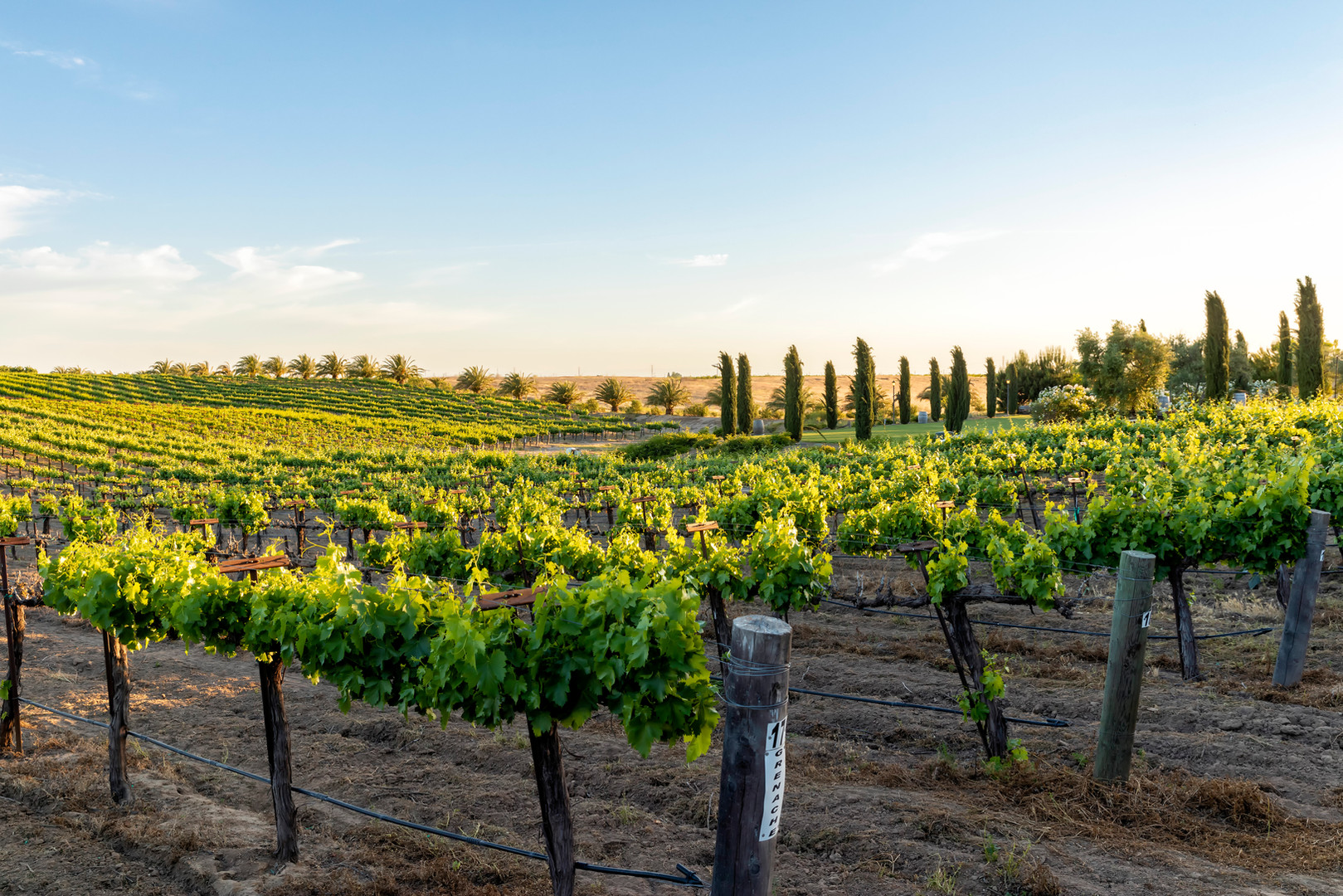 Toca Madera Winery photo by Stephan Alvin Photography