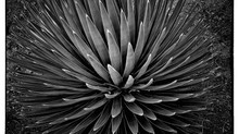 BW Succulent Prints Now Available