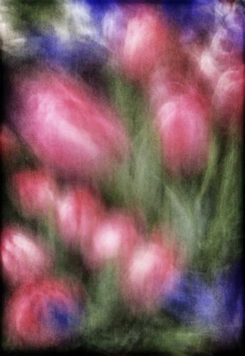 Tulip-Palette.jpg