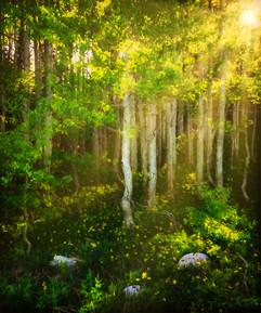 Sunrays on the Grove