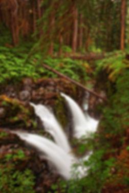 Woodland-Splendor.jpg