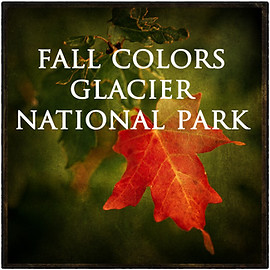 COLORS of AUTUMN - GLACIER NATIONAL PARK