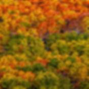 Autumn's-Palette.jpg