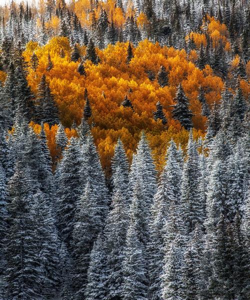 seasonal-mishap.jpg