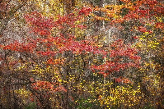 Fall-Palette.jpg