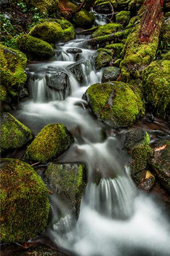 Backcountry rapids in Washington, USA
