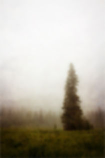Fog and evergreen trees somewhere in Orgon