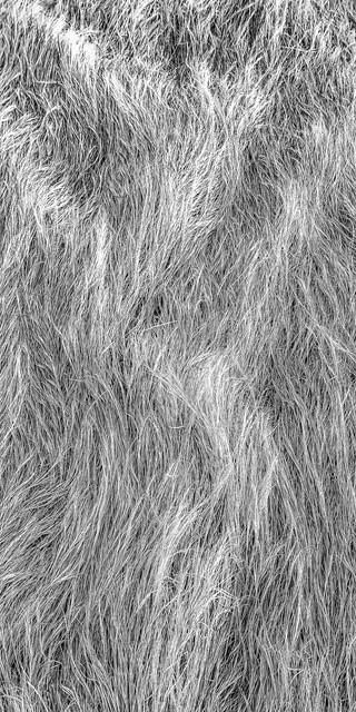 Soft Grasses