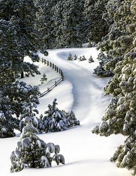 Elegance Of Winter