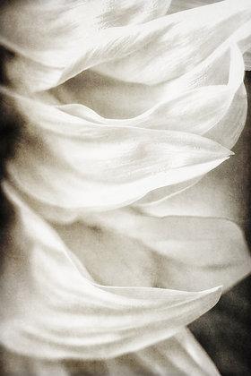 """""""Petals of Silk"""""""
