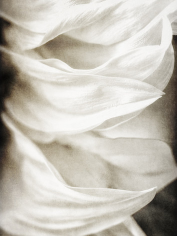 Petals of Silk