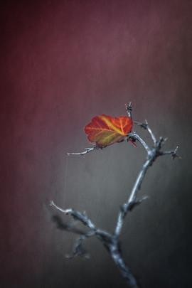 The Last Whisper of Fall