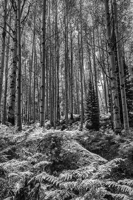 Rock in the Woods