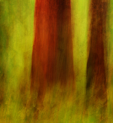 """""""Sequoia Abstract #23"""""""
