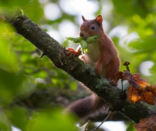 Red nut picking-0240.jpg