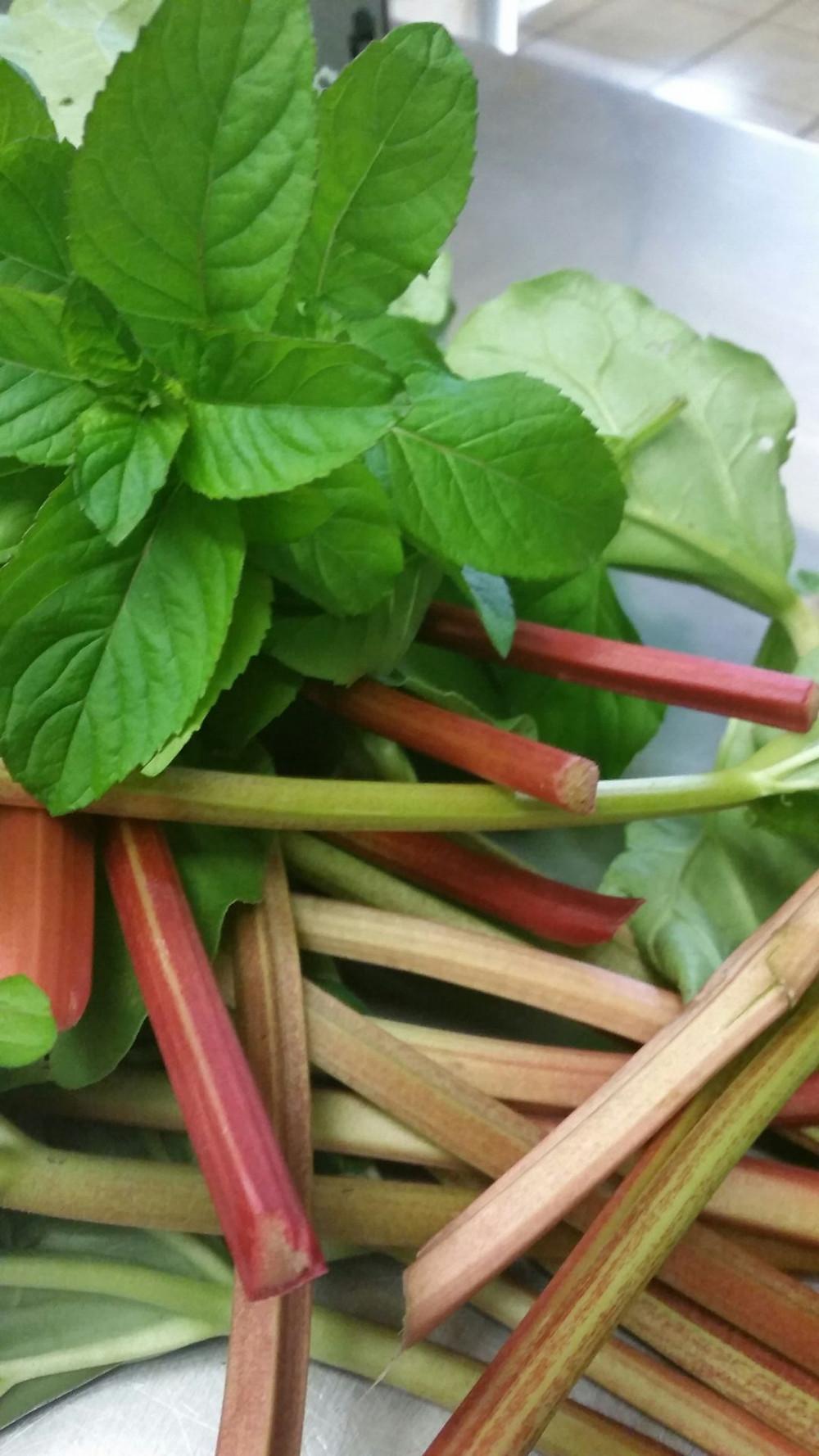 Mint & Rhubarb