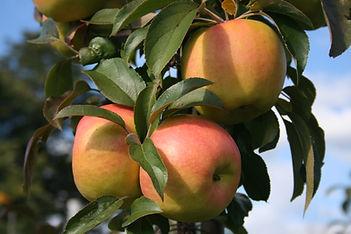 Passionata pomme