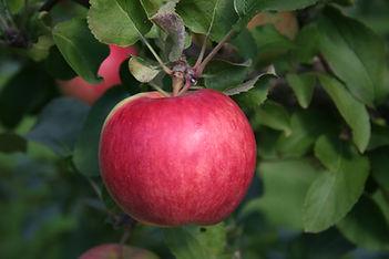 Rosinette pomme