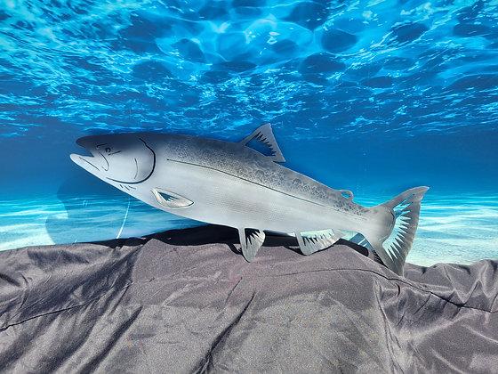 Chinook Atlantic Salmon King Salmon