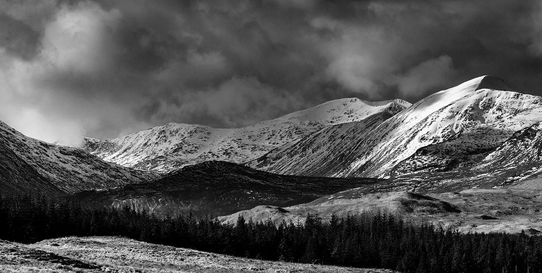 West Highland B&W winter